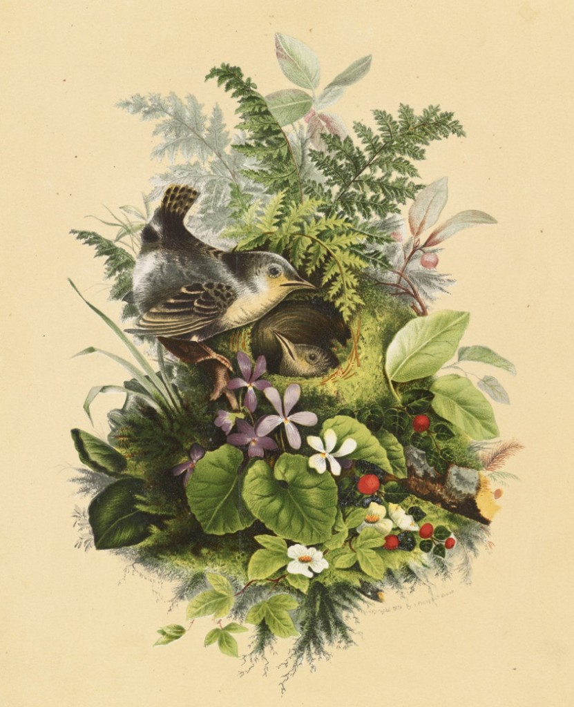 Birds_Nesting_among_Plants_and_Flowers_(Boston_Public_Library)